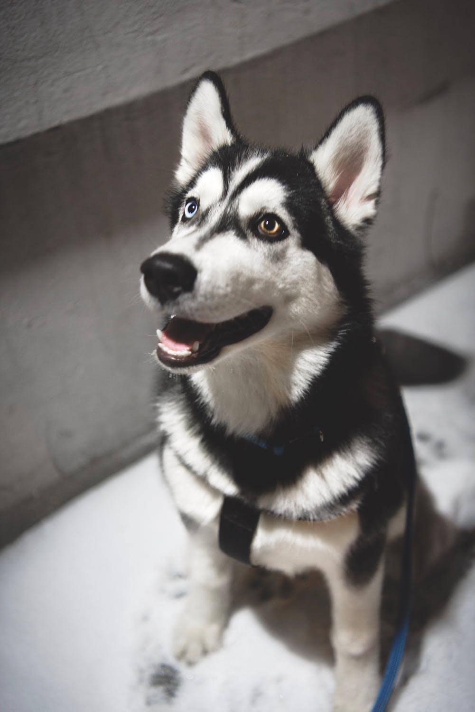 Best In Home Dog Training in Austin TX